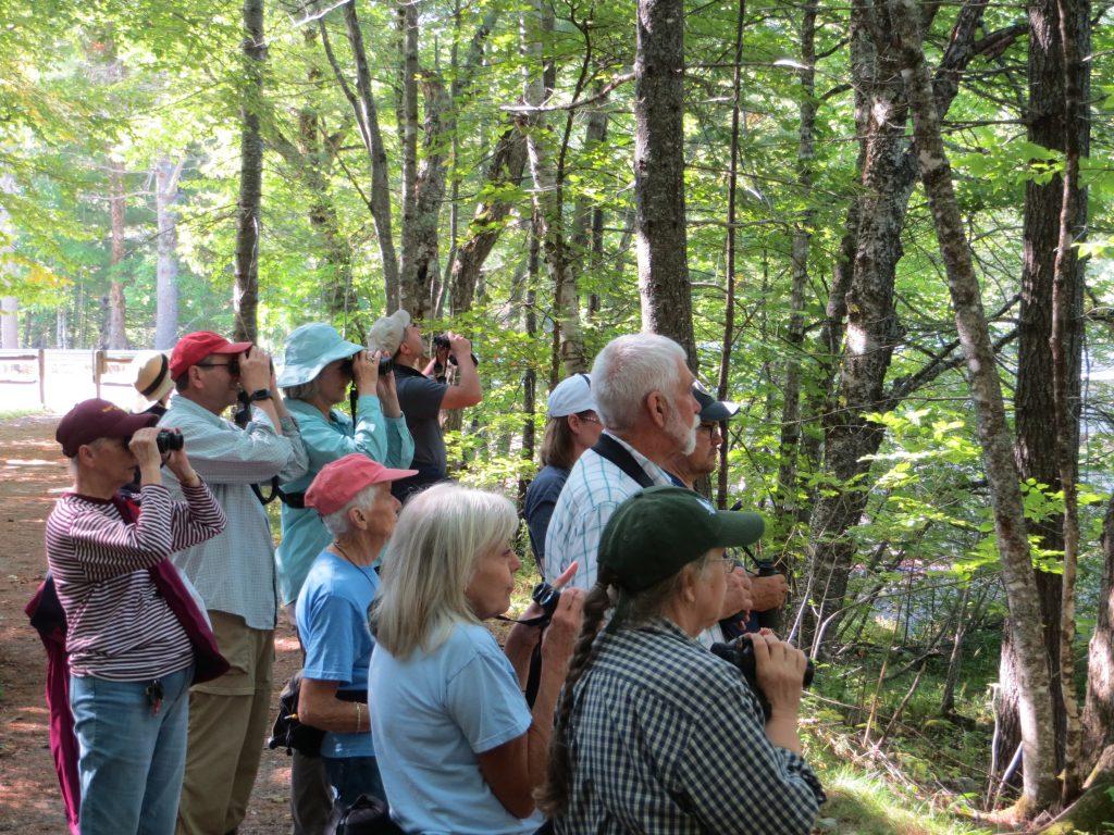Birding along the stream